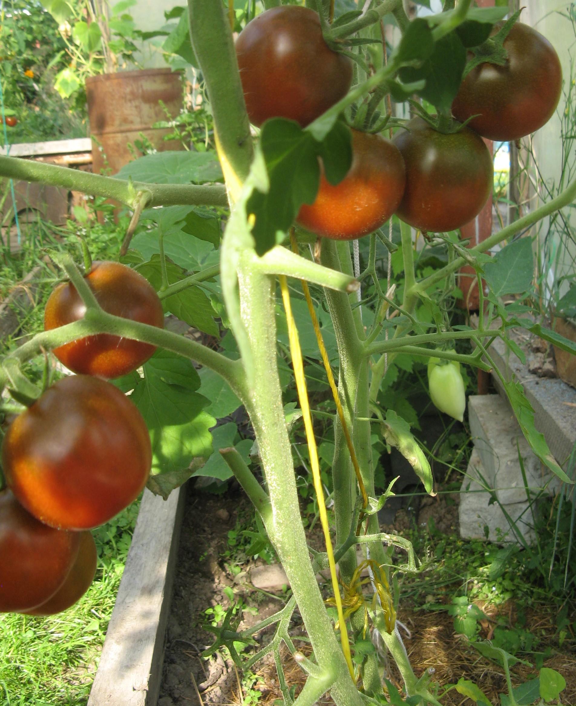 Фото натянул по самые помидоры вк 24 фотография